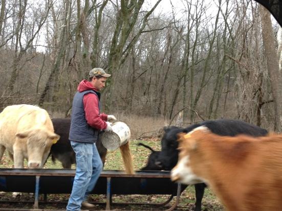 Checkin' some cows