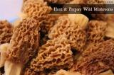 How To: Hunt and Prepare Wild Mushrooms