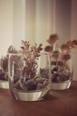 DIY Golden Succulents